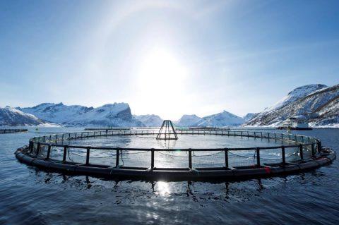 延續半世紀的挪威傳奇 大西洋鮭魚現代化養殖50年 以科技創新、永續管理揚名國際