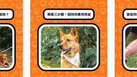 狗狗節來了! 阿里巴巴集團與狗醫生協會邀大家關注流浪犬議題